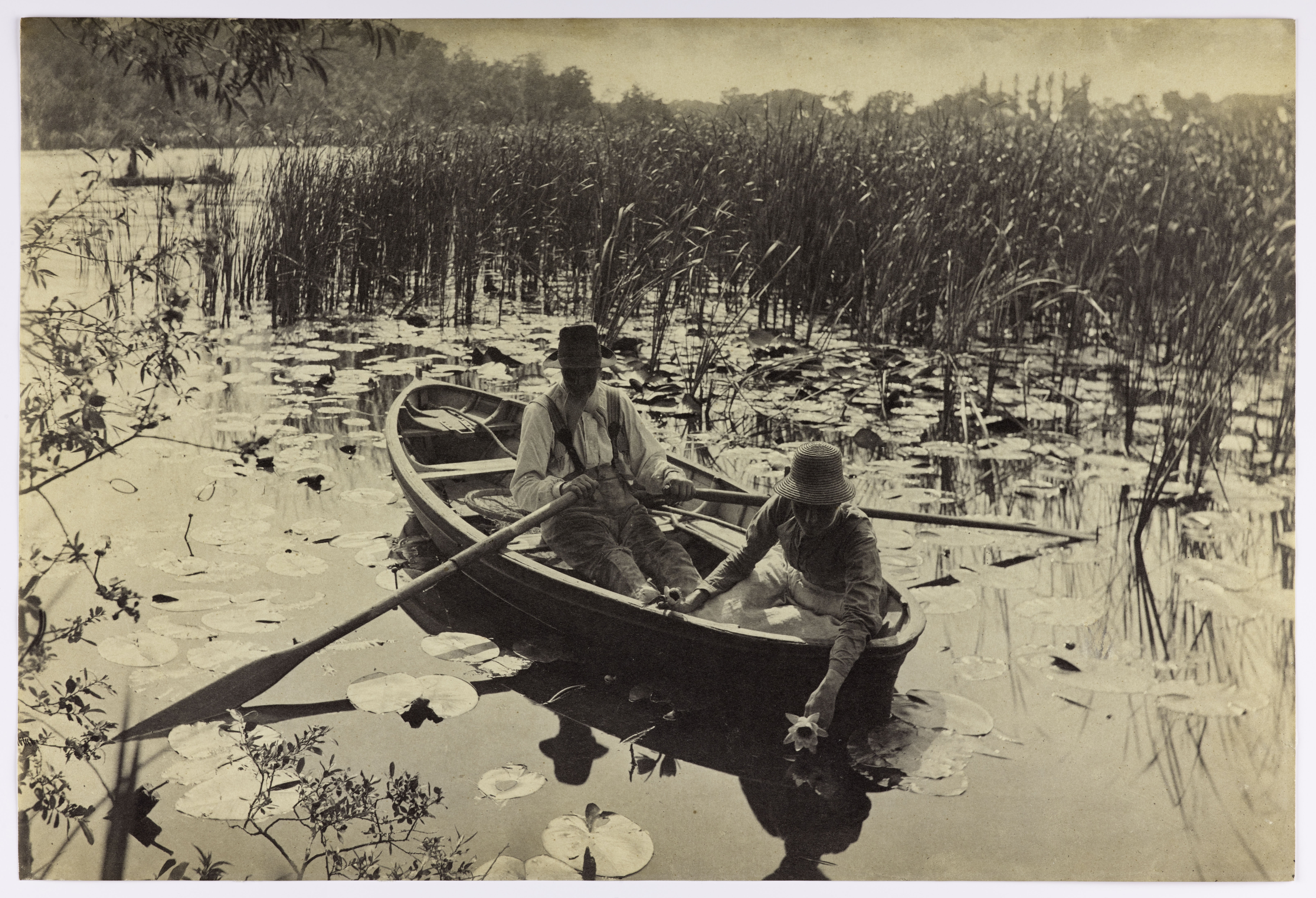 Gathering Water Lilies By Peter Harry Emerson 1886 Platinum Print