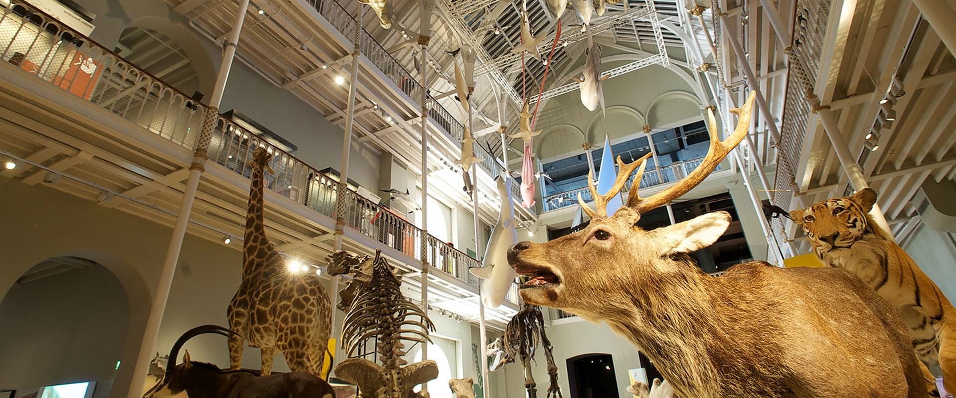 Edinburgh Museum Of Natural History