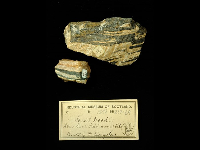 Specimens of fossil wood with 19th century museum label: 'Fossil Wood (?) above coal field around Tete. Presented by Dr Livingstone.'