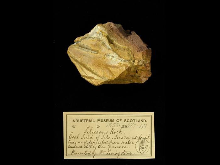 Specimen of siliceous rock with 19th century museum label: 'Siliceous rock. Coal field of Tete. Lies round fossil trees as if deposited from water rendered still by their presence. Presented by Dr Livingstone.'