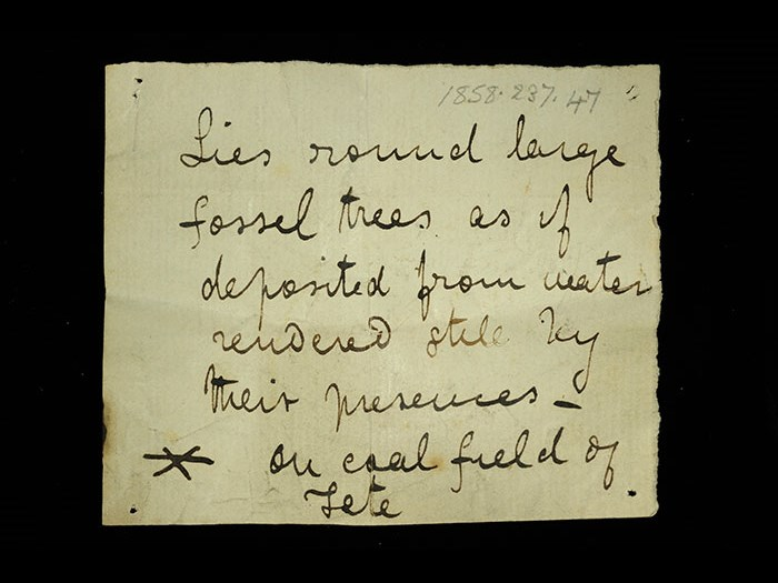 Livingstone's note written in the field for the siliceous rock: 'Lies round large fossil tress as if deposited from water rendered still by their presences on coal field of Tete.' The asterisk indicates relation to the following specimen.