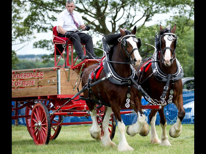Clydesdale horse turnout carriage driving © Ruth Armstrong Photography