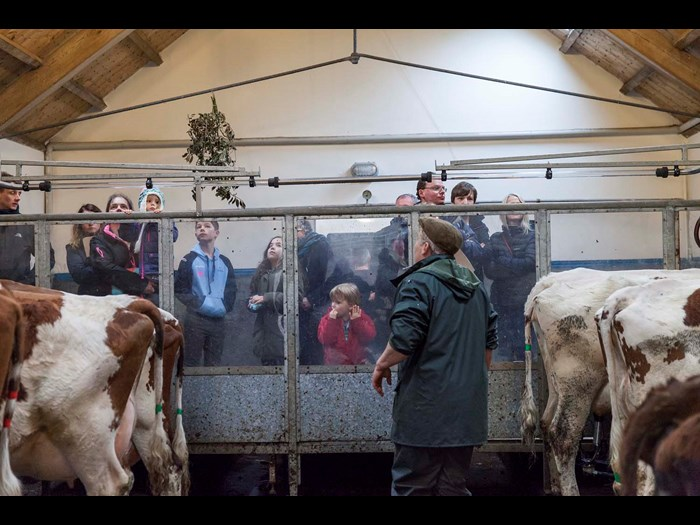 Get to grips with milking in our 1950s byre © Ruth Armstrong Photography