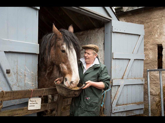 Meet Mairi the Clydesdale up at Wester Kittochside Farm  © Ruth Armstrong Photography