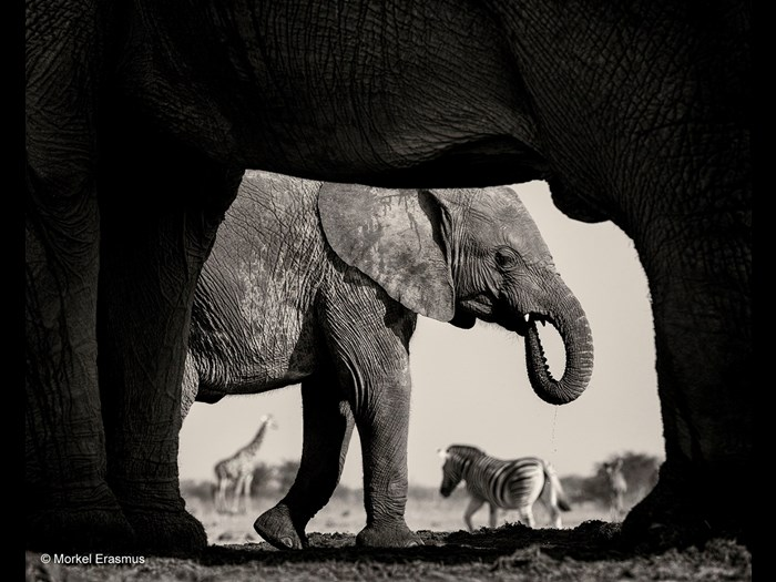 Wildlife Photographer of the Year 2015. Black and White finalist © Morkel Erasmus (South Africa), Natural Frame.