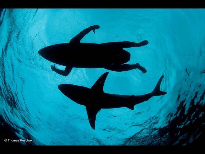 Wildlife Photographer of the Year 2015. The Wildlife Photojournalist Award: single image © Thomas P. Peschak (Germany / South Africa), The Shark Surfer.