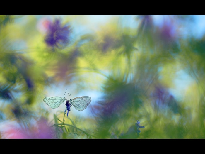 Wildlife Photographer of the Year 2015. Invertebrates, Finalist © Klaus Tamm (Germany) Wings of summer.