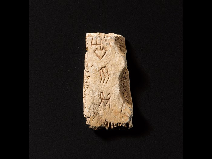 Oracle bone of tortoiseshell or ox-bone, with incised script recording divination, excavated at Yinxu, near Anyang, Henan Province: China, Shang dynasty, 1300-1050 BC.