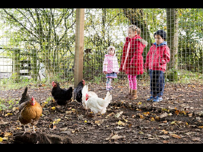 See the hens up at the farm this winter © Ruth Armstrong Photography