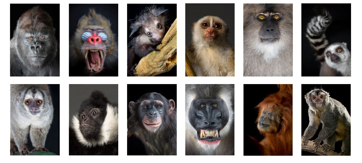 Which primate are you?