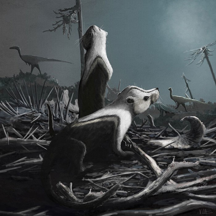 Jurassic Coast: Stereognathus by Mark Witton