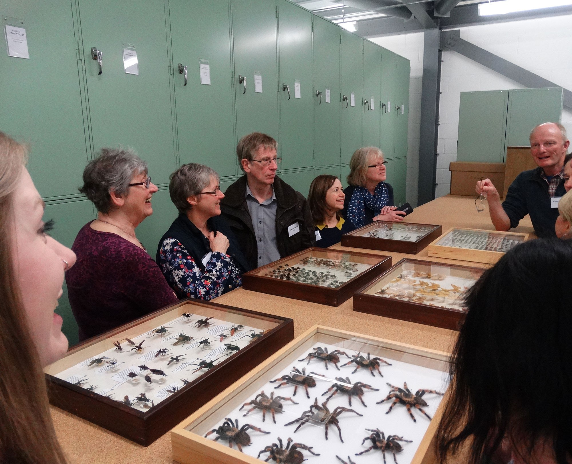 Tour of the entomology collection