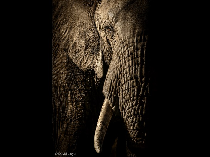 'The power of the matriarch' by David Lloyd, New Zealand/UK © David Lloyd