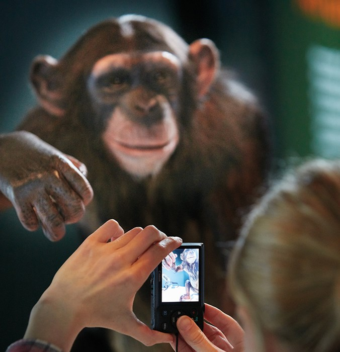 Photography of a specimen from Monkeys! A Primate Story before the start of the international tour.