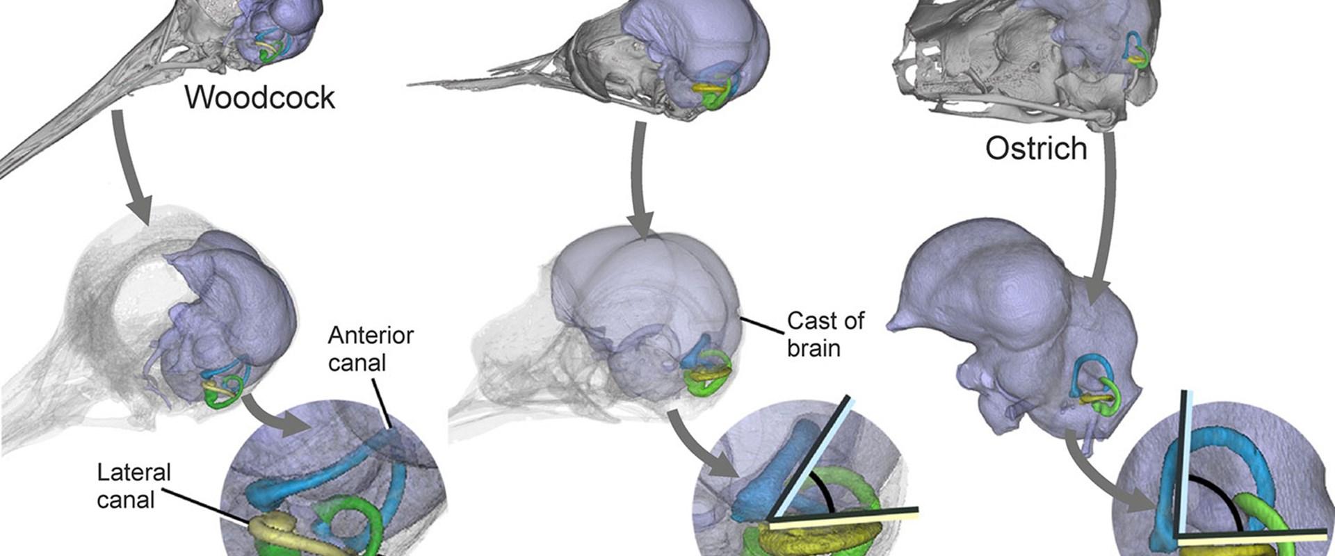 the birds analysis