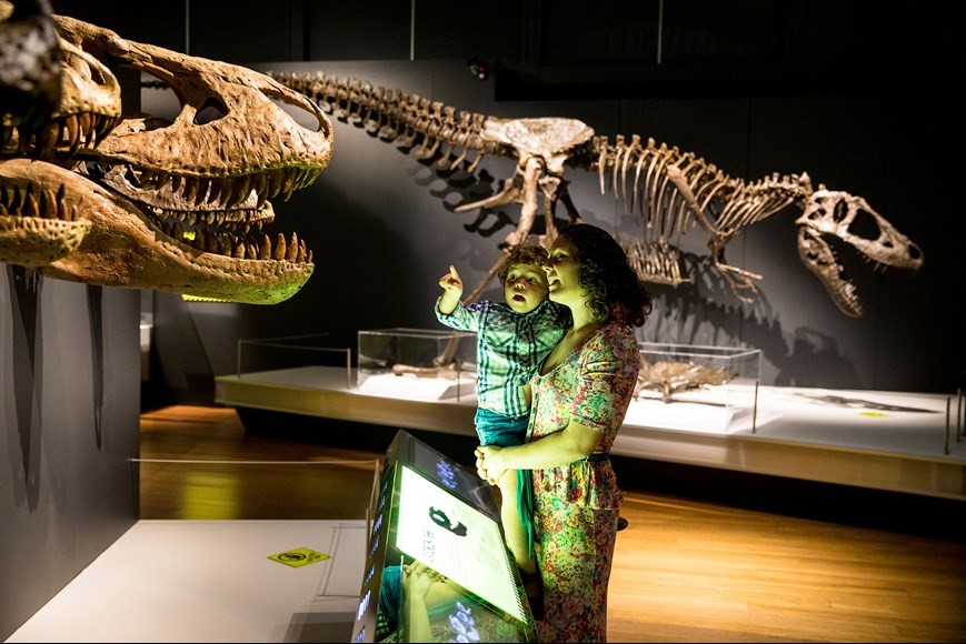 Get up close to one of the many tyrannosaurs with our models, real fossils and casts.