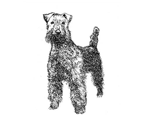 The previous image from the information panel resembled a terrier.