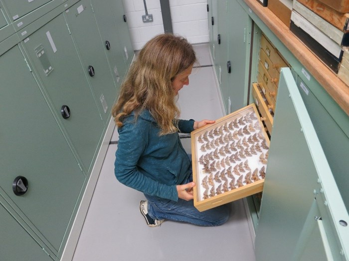 Katty is a Collections Volunteer within our Natural Sciences department