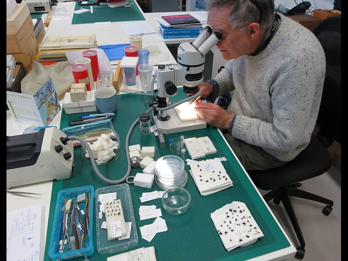 David is a Collections Volunteer with our Natural Sciences department