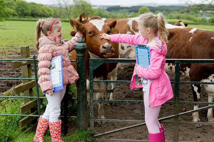Girls with Ayrshire cows