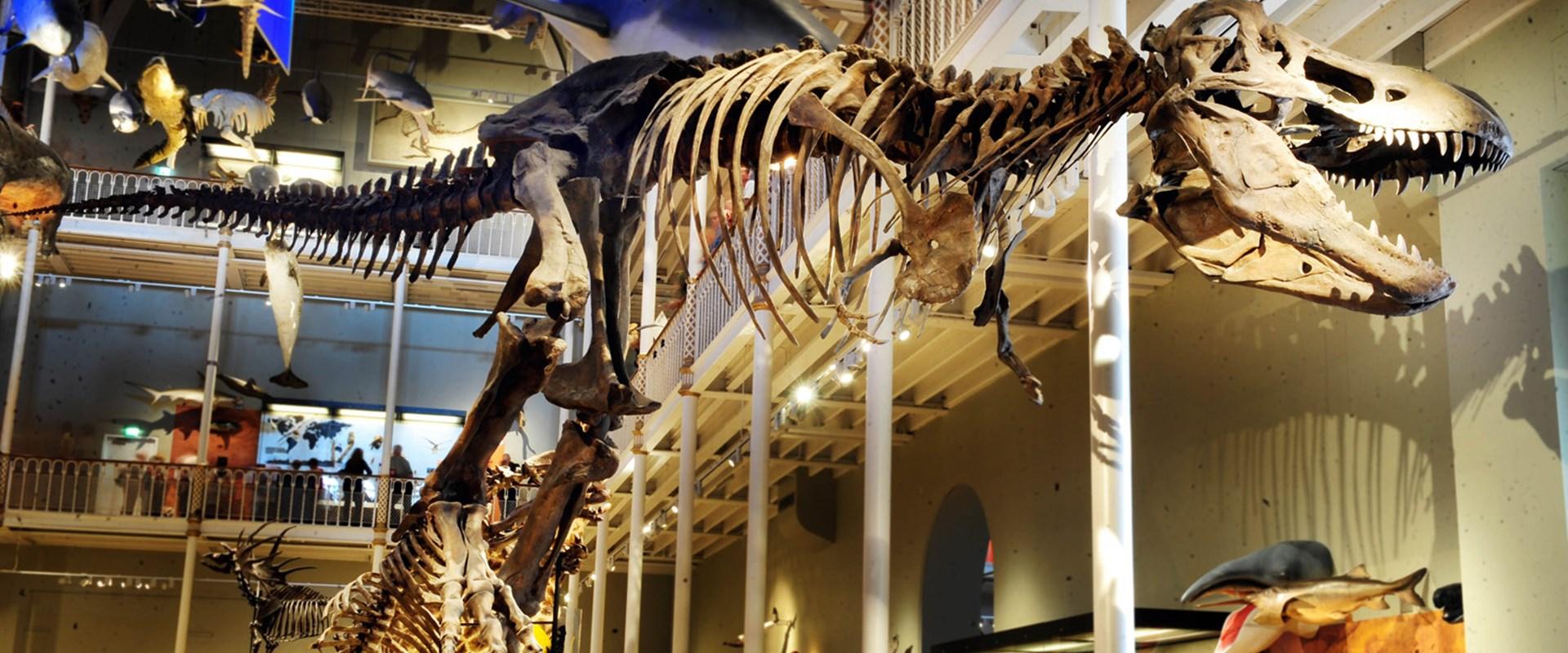dinosaurs UK and Ireland