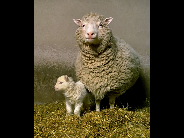 Dolly and her first lamb Bonnie. © Roslin Institute.