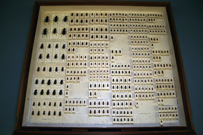 Insects in the Entomology collection
